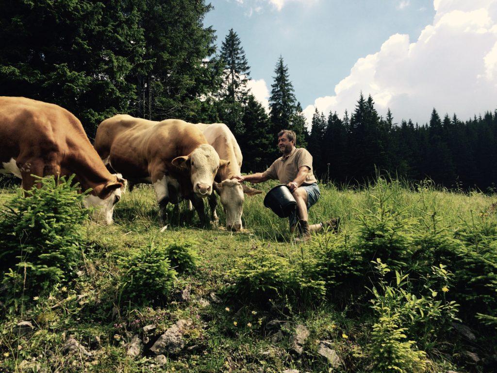 Landwirtschaft und Alm